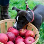 SEE THE MAP: 40 Pick-Your-Own Orchards in Central Mass